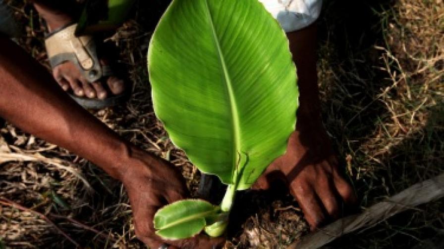 Жена засади 400 хил. дръвчета за 46 години
