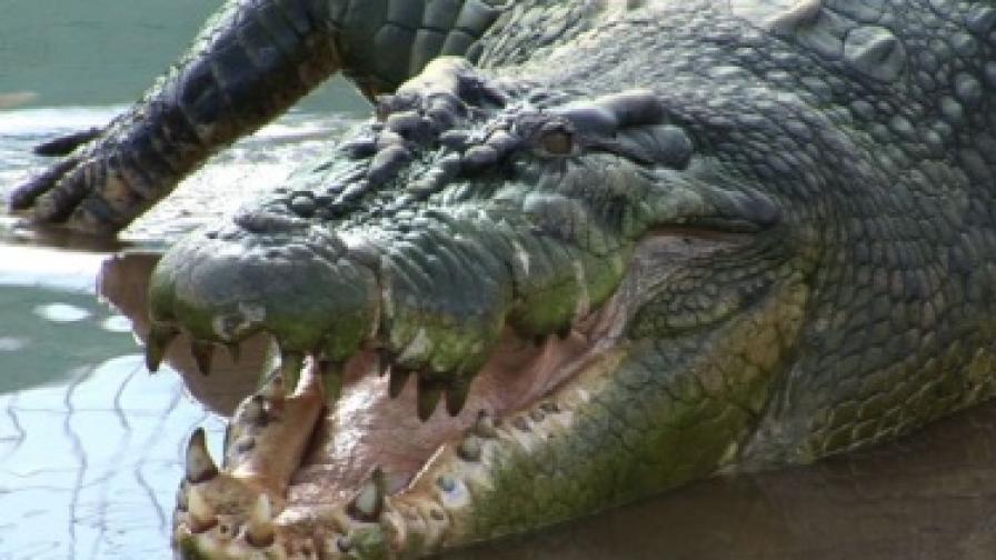15 хиляди крокодила избягаха от ферма в Южна Африка