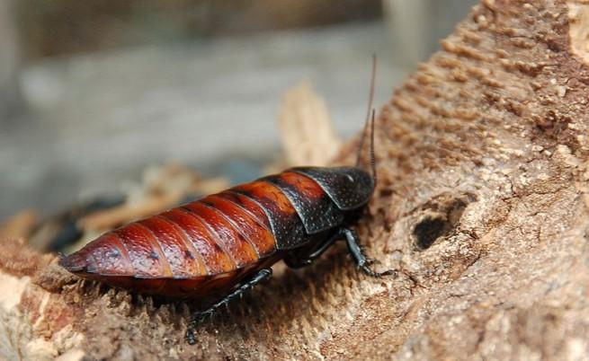 Специалисти предупреждават: Нашествие от хлебарки заради меката зима