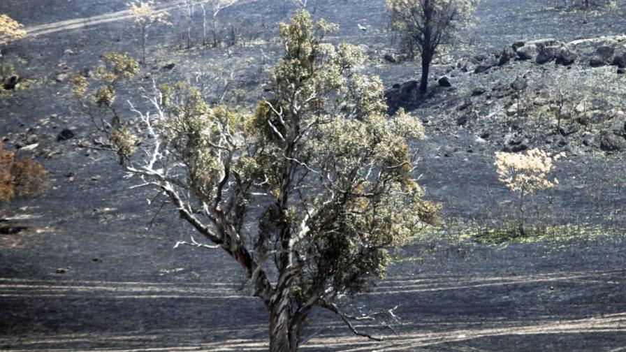 Екоактивистка прекара 15 месеца на дърво