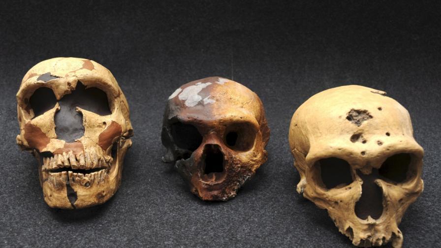 Очите на неандерталците са причина за изчезването им