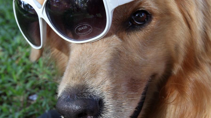 Куче от Беларус стана милионер