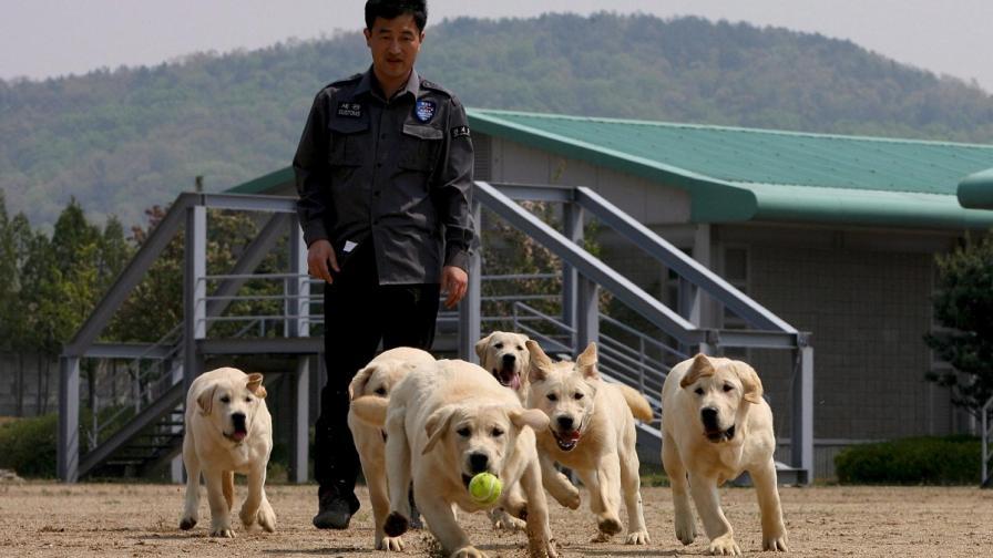 Стопаните на кучета се радват на по-здрави сърца