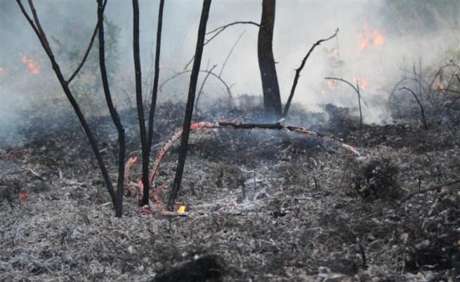 Нови 2 хил. декара гори горят край Свиленград