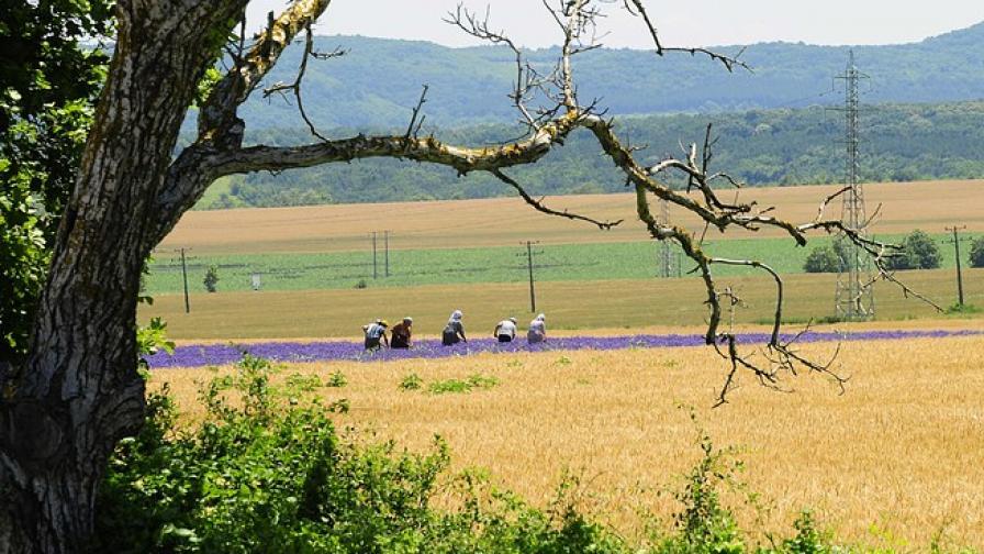 Малките земеделски производители са важни, твърди МЗ