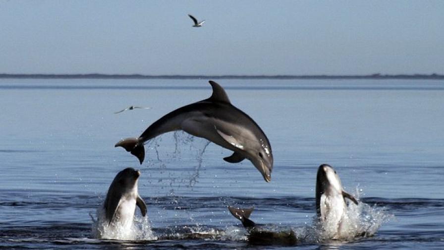 Вирус мори делфините в Атлантика