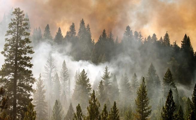 Щетите от пожара в Калифорния минаха 20 млрд. долара