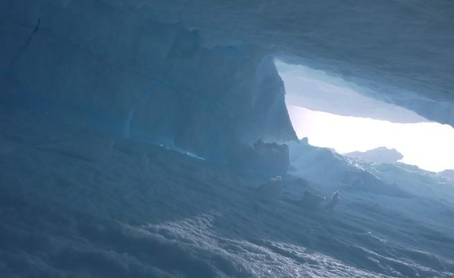 Откриха древна гора под топящ се ледник в Аляска