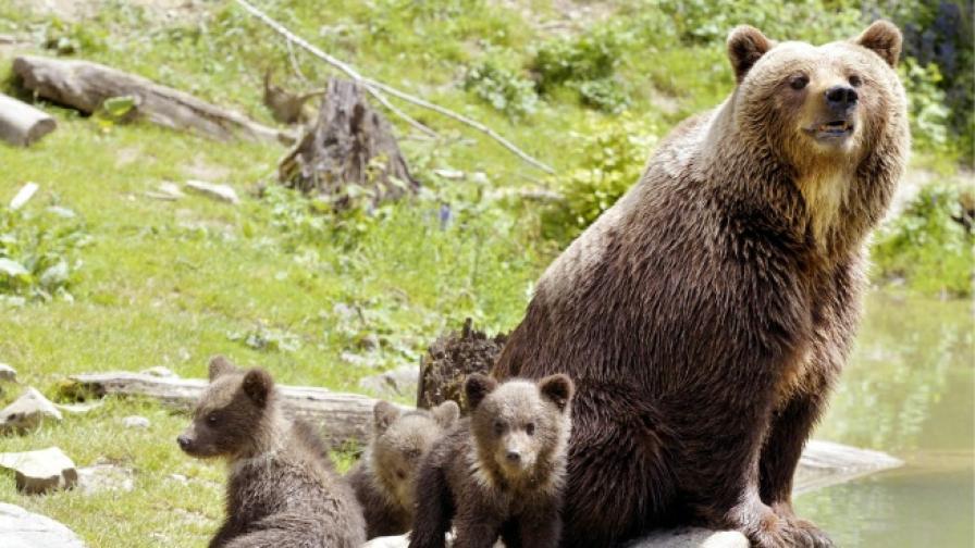 За древните мечки размерът е имал значение