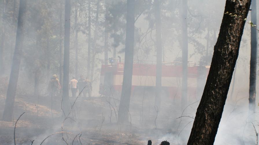 4 пъти по-малко засегната от пожари площ през тази година