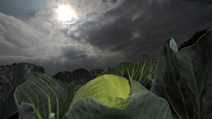 Зелето предпазва от вредните ефекти на радиацията