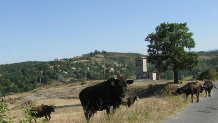 Кутев: Само европейци ще могат да купуват земя в България