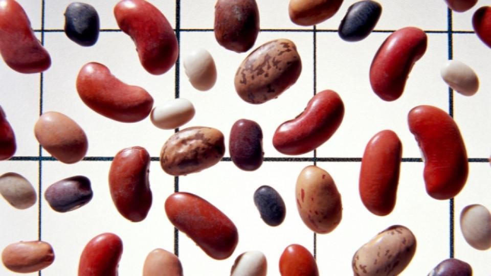 Джак и бобеното зърно