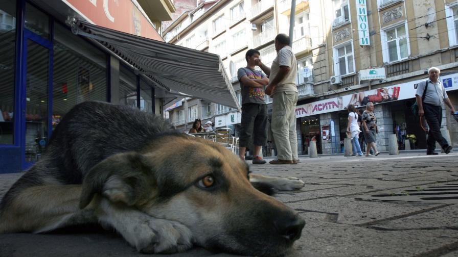 Близо 500 кучета ще бъдат пуснати по улиците в София