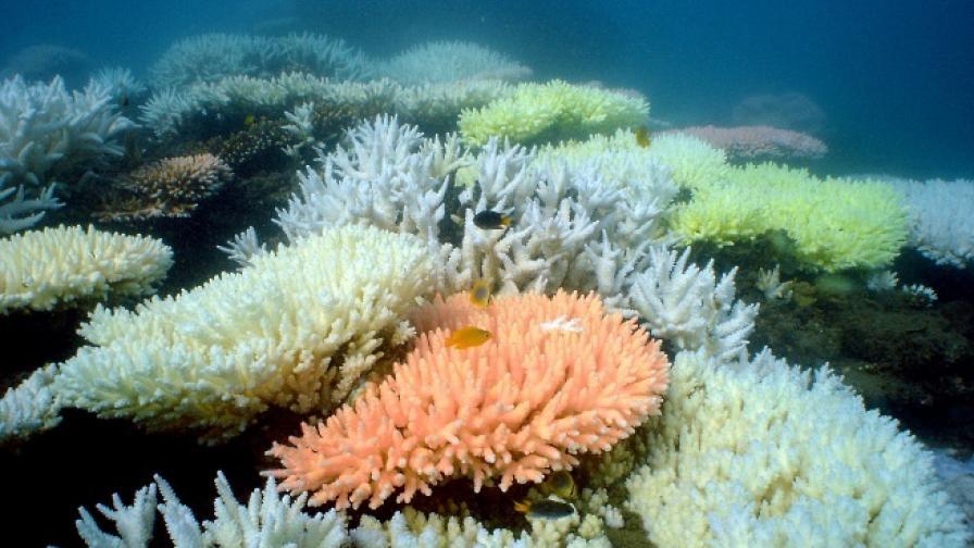 Съединение, получено от коралите, лекува фрактури