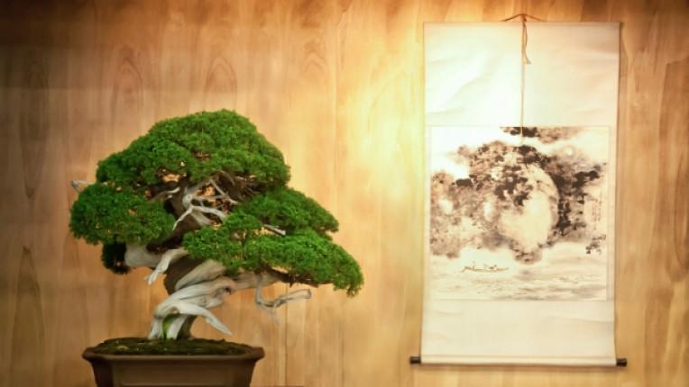 бонзай дърво растение