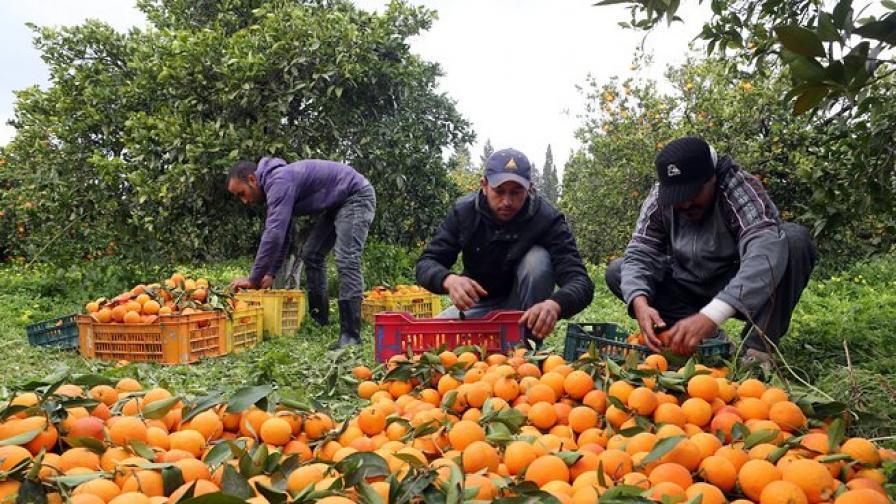 Оранжевите храни намаляват риска от рак